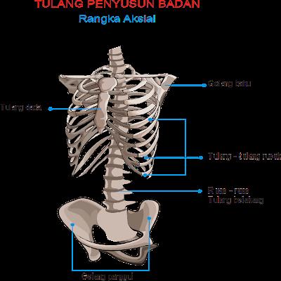 Sistem Gerak Badan Manusia | Gubuk Ambe