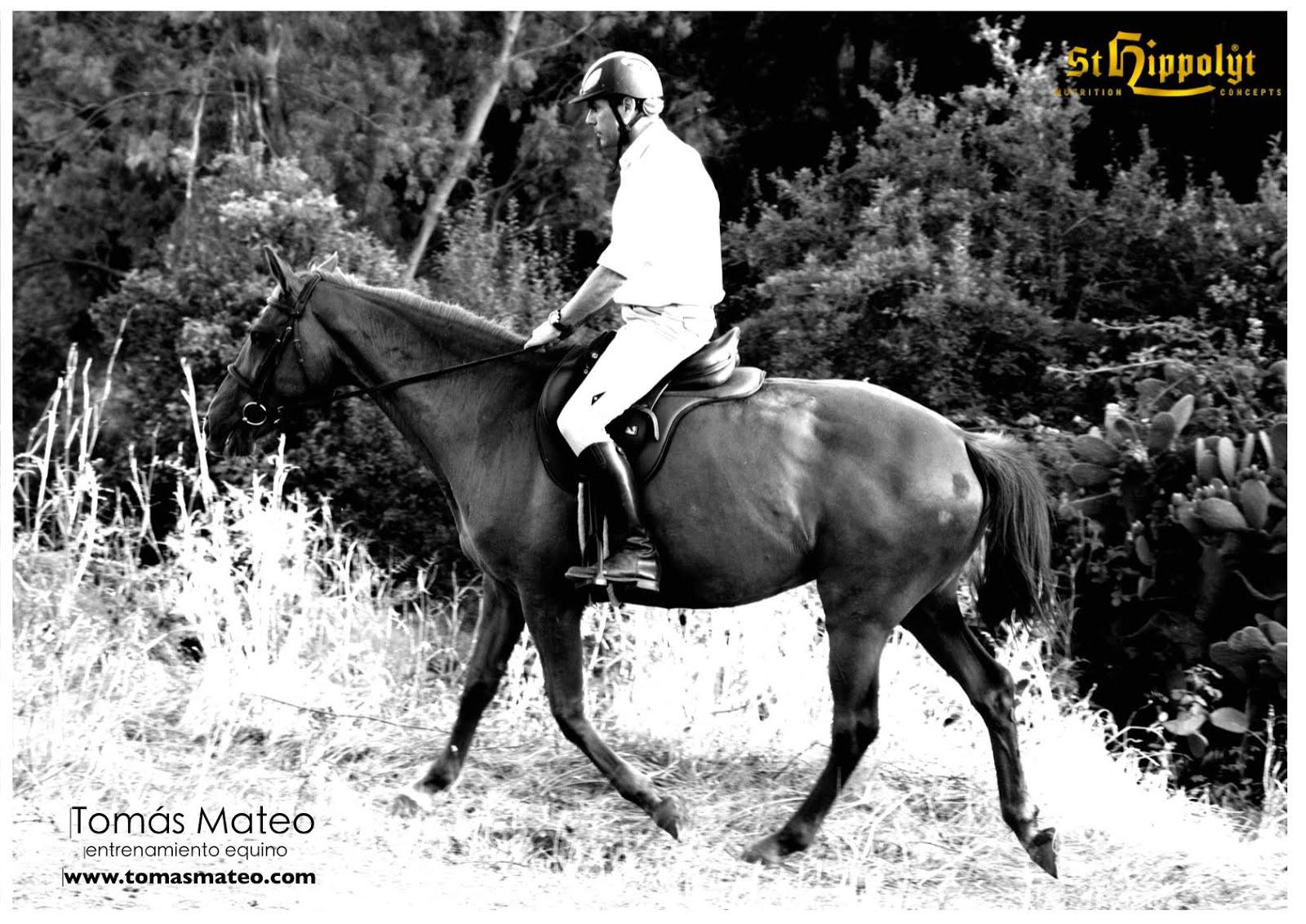 Tomás Mateo, Entrenador Equino