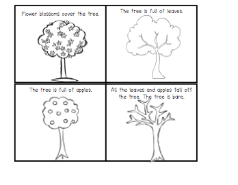 Apple Lifecycle by Jennifer Wiggins | Teachers Pay Teachers