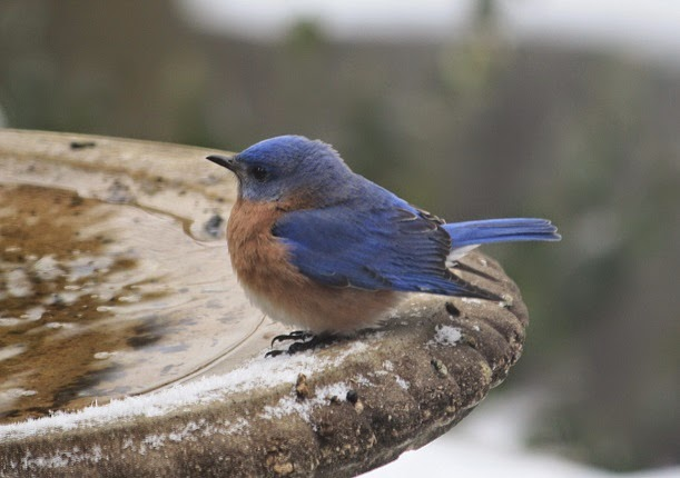 sweet little bluebird