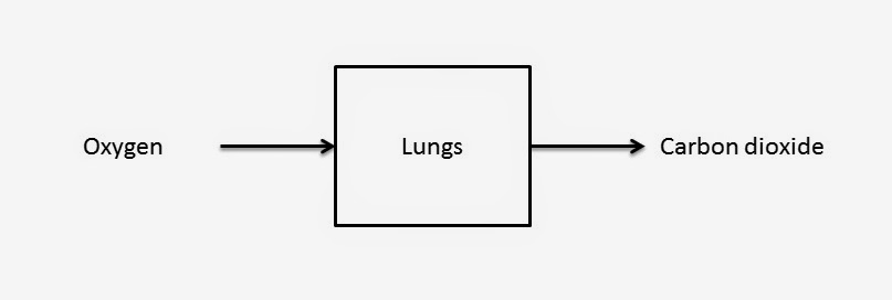 Geog100 1 a geographic approach to physical and human systems clearly lungs are part of a larger system the human body but their basic function is to take in oxygen and exchange it with our blood publicscrutiny Choice Image