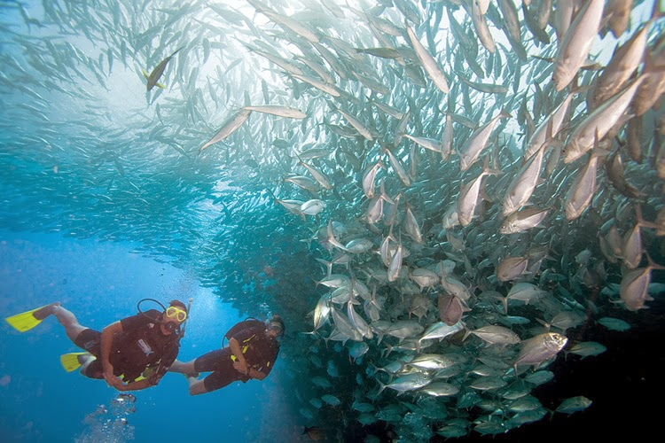 Scuba Diving ops by Barefoot at Andaman