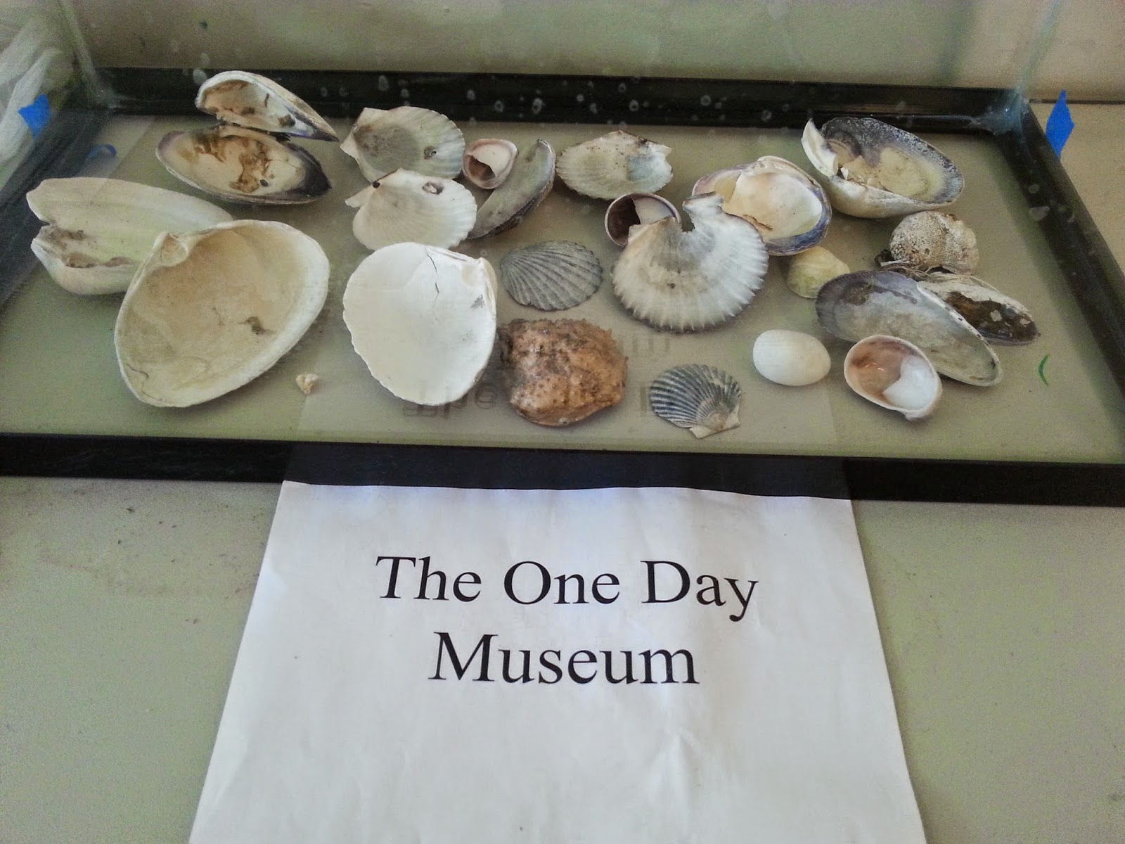 Types of seashells for kids viewing gallery - Types of seashells for kids ...