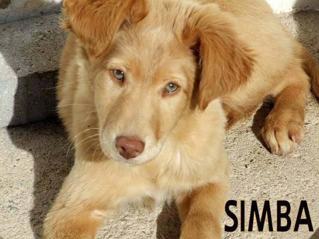 Steven Rogers  SIMBA+ZFR