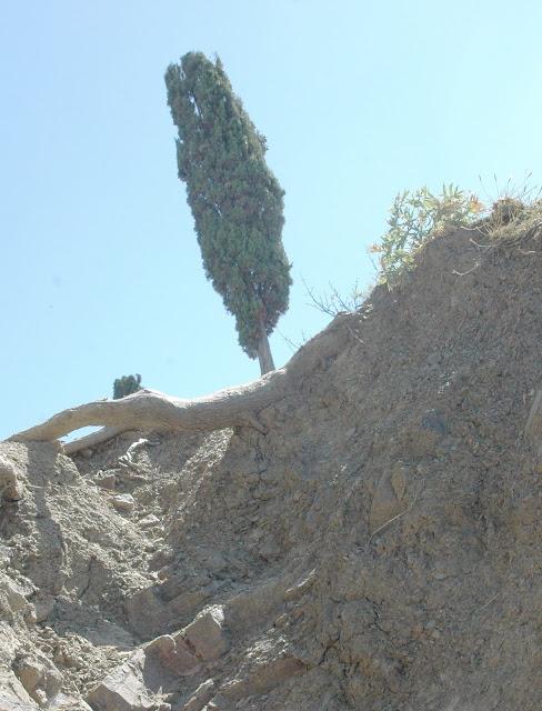 Алушта,Крым,фото,кипарис,скала,картинка