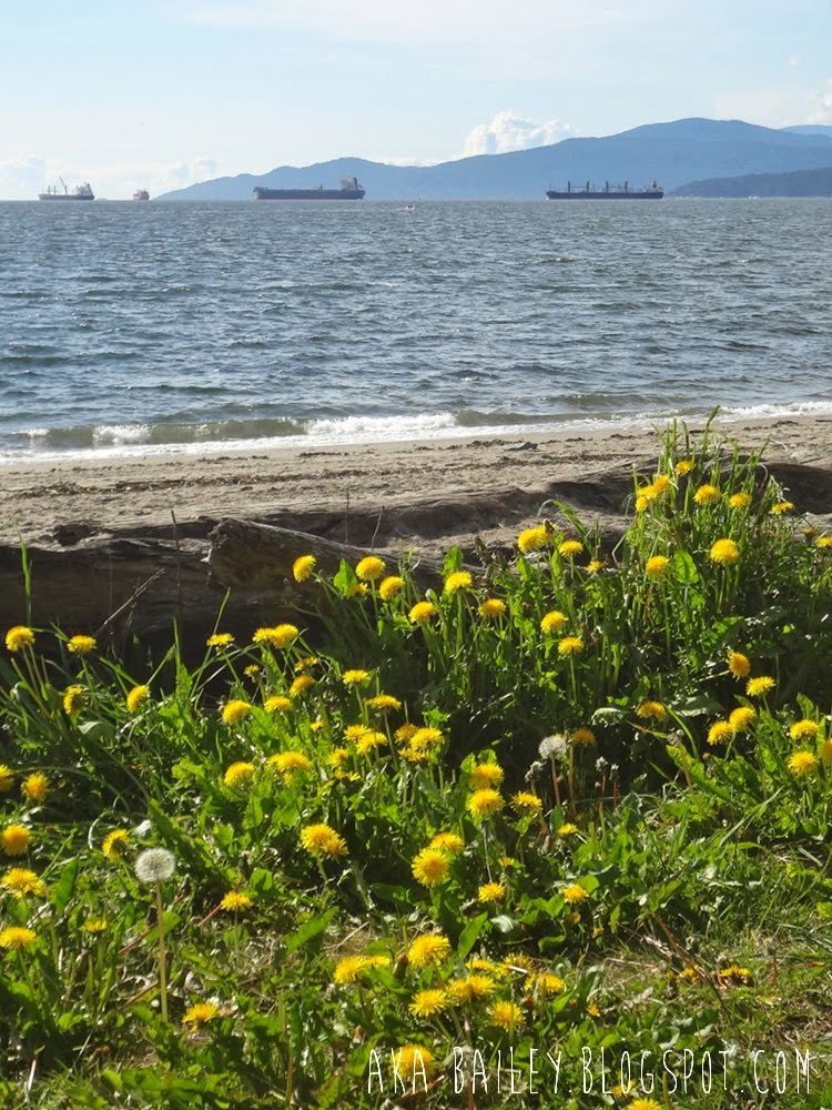 Dandelions, beach, and ships in Vancouver's English Bay