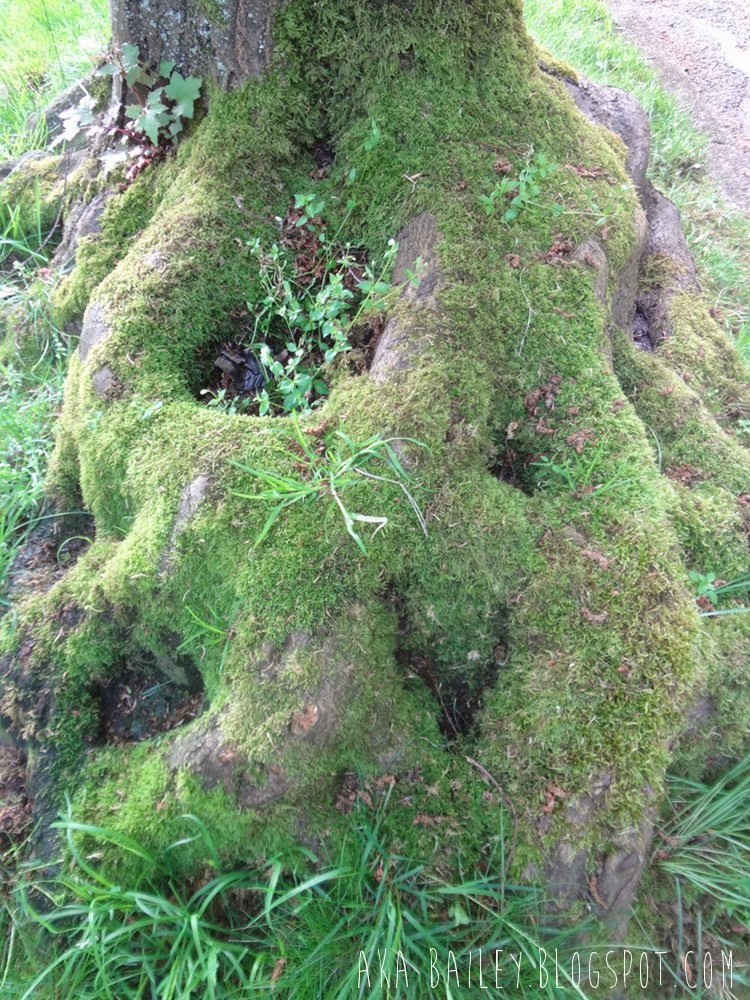 Mossy roots in Vancouver