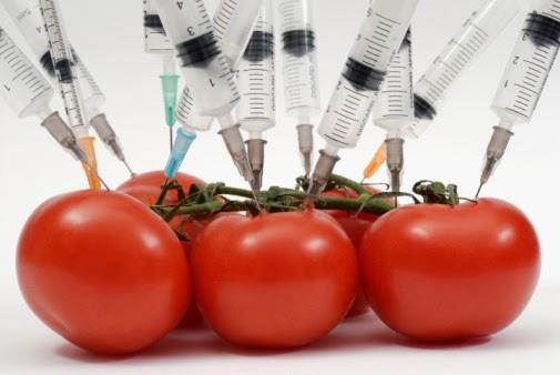 transgénicos, soberanía alimentaria,