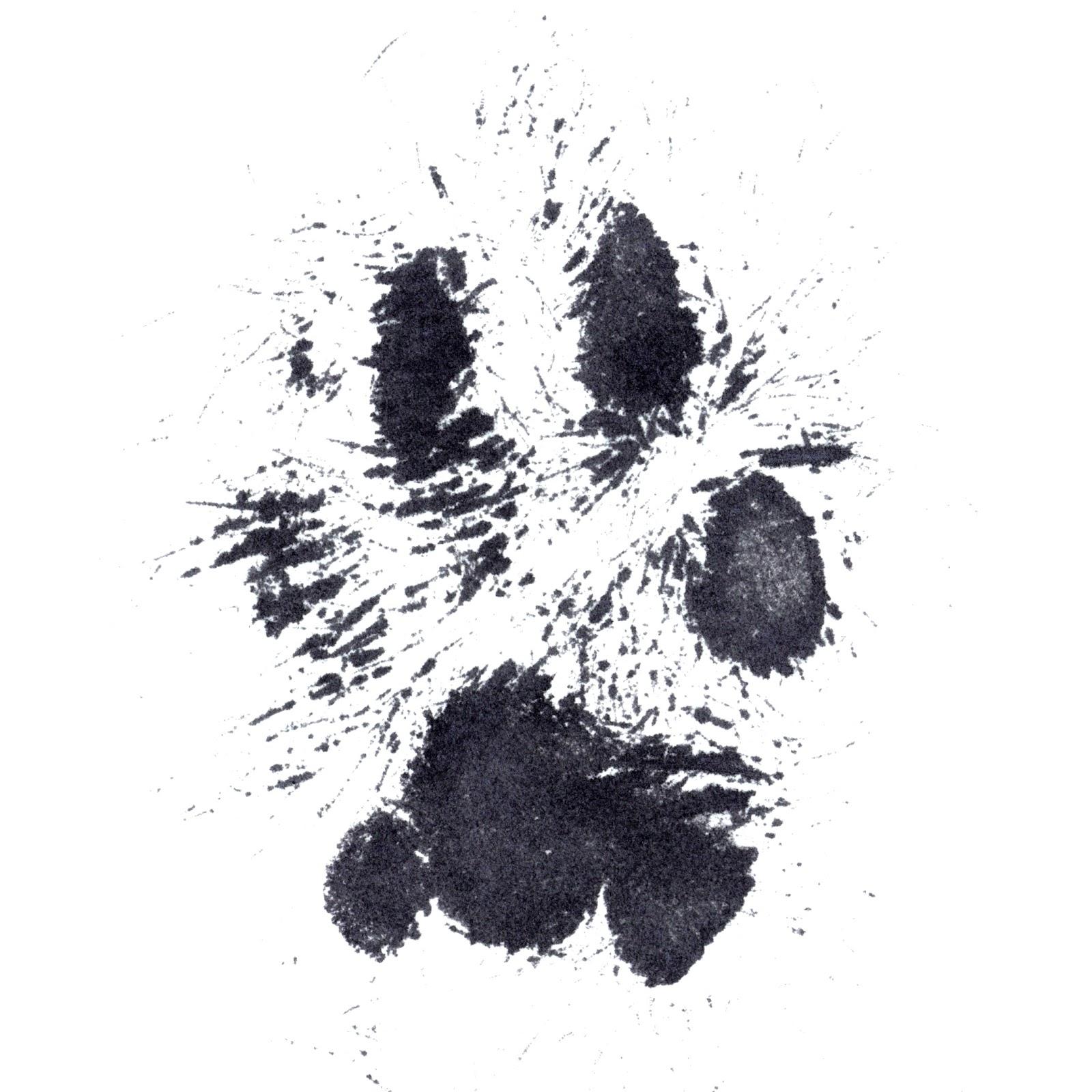real dog paw prints wwwimgkidcom the image kid has it