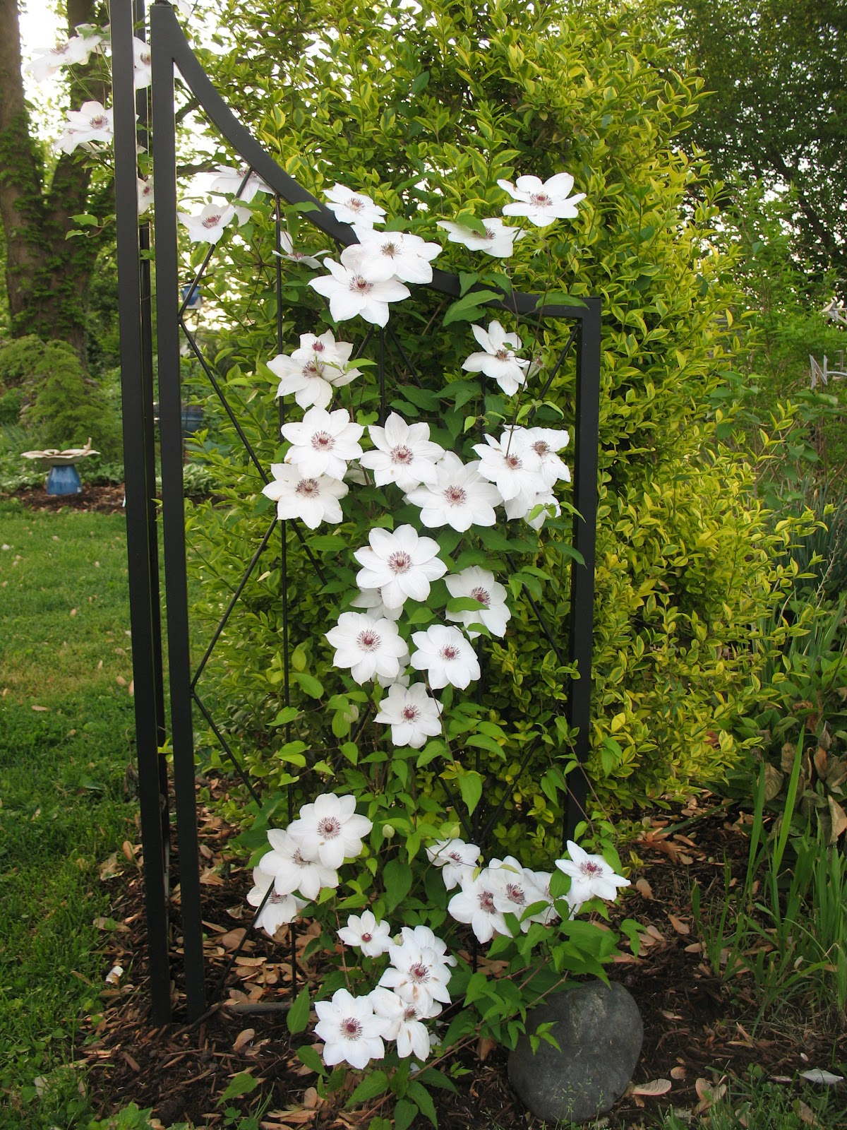 greenbow garden bloggers bloom day april 2012. Black Bedroom Furniture Sets. Home Design Ideas