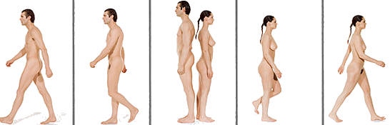 Hombres mujeres y la diferencia sexual