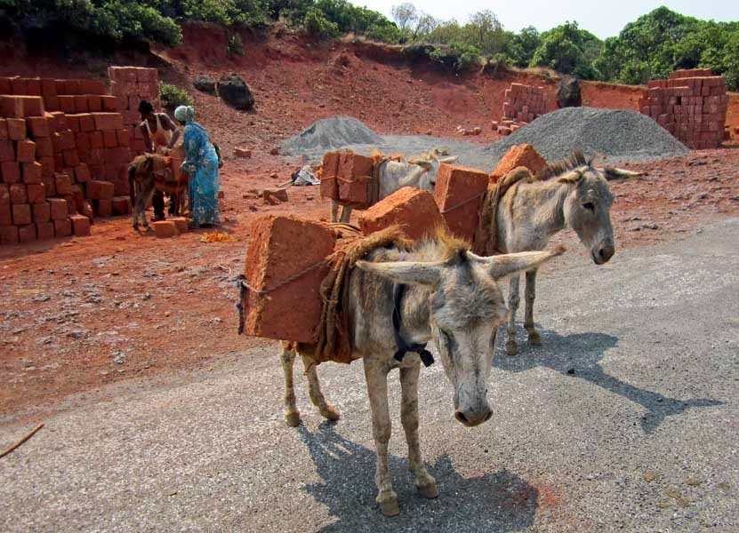 Two donkeys with a load of bricks