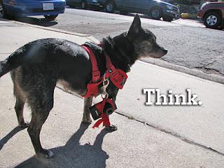 Poor-Dog-Behavior