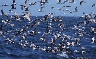 Mudar de vida. voar, gaivotas, ir além, transceder, transformar, vida