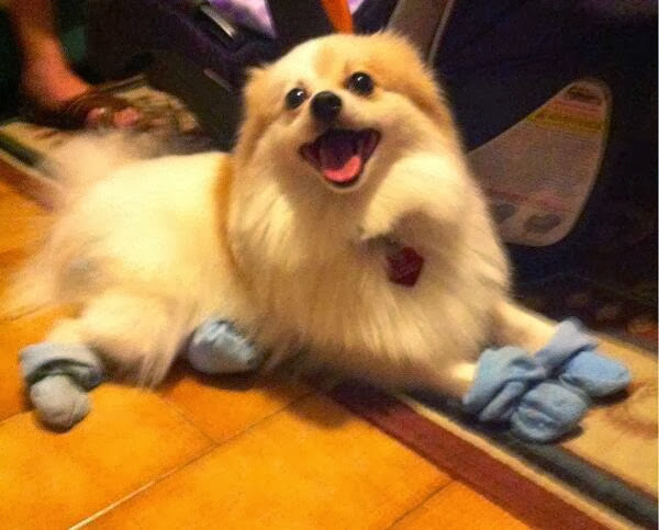 adorable dog pictures, dog wearing socks