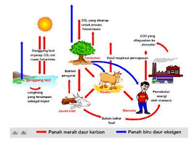 Siklus Oksigen