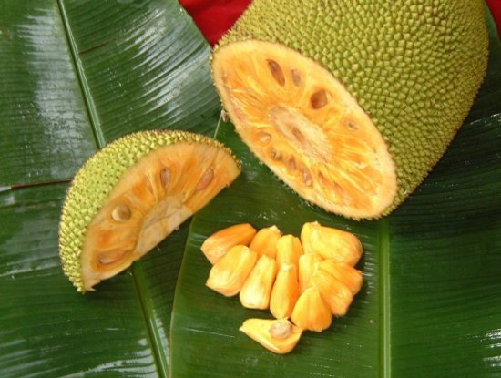 how to grow jackfruit in california