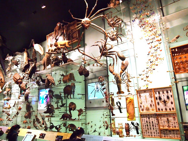 Olmec Head American Museum Of Natural History