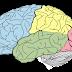 We must awaken our right hemisphere