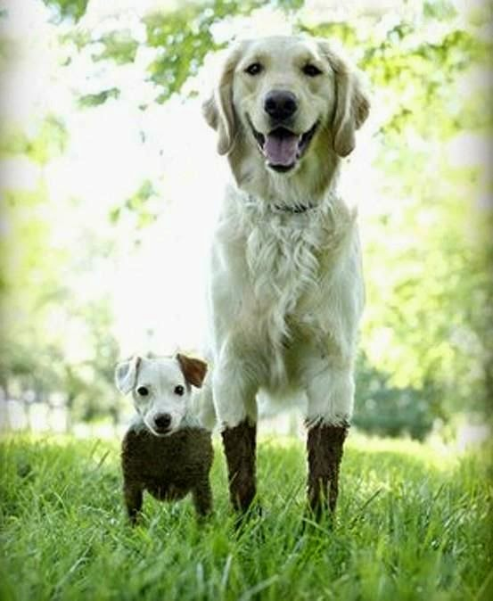 Cute white dog and his baby