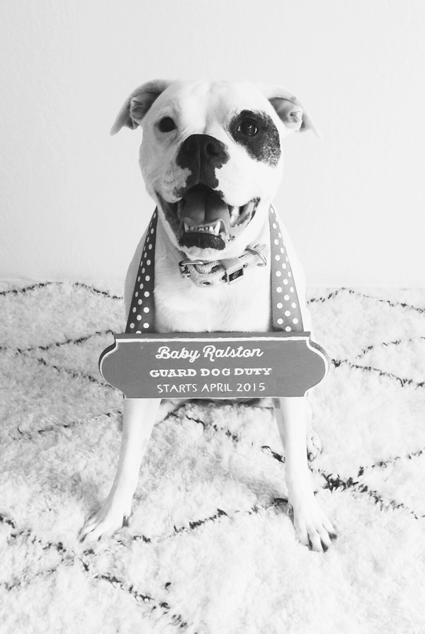 Baby announcement ideas - include your furry baby!