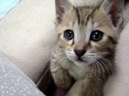 5 Gatos Ideales para la Familia
