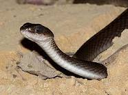 Snakes Picture