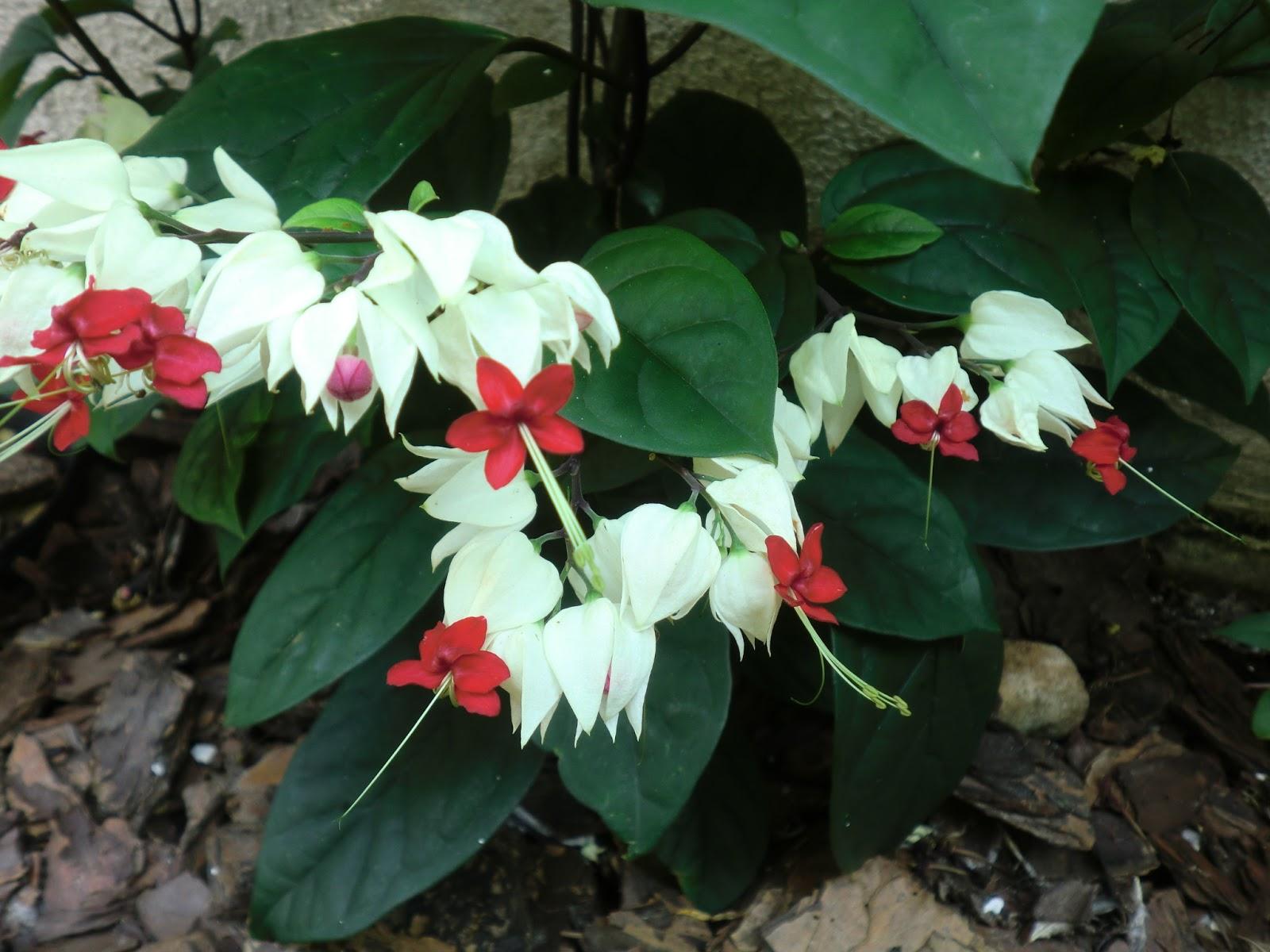 flores para jardim verao : Flores de Verao - Casa e Reforma