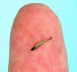 Smallest Animals On Earth