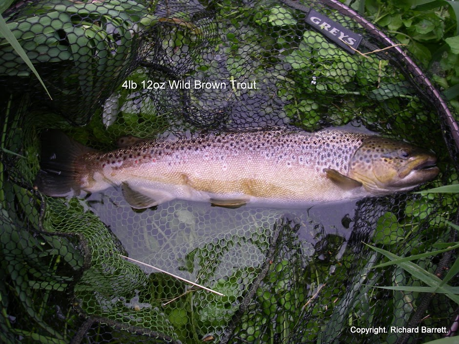 Small stream brown trout.