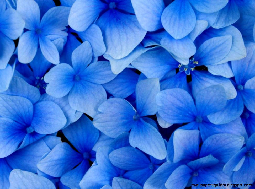 Beautiful Blue Flower wallpaper  1024x768  22518
