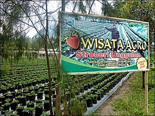 Agrowisata Stroberi Kebun
