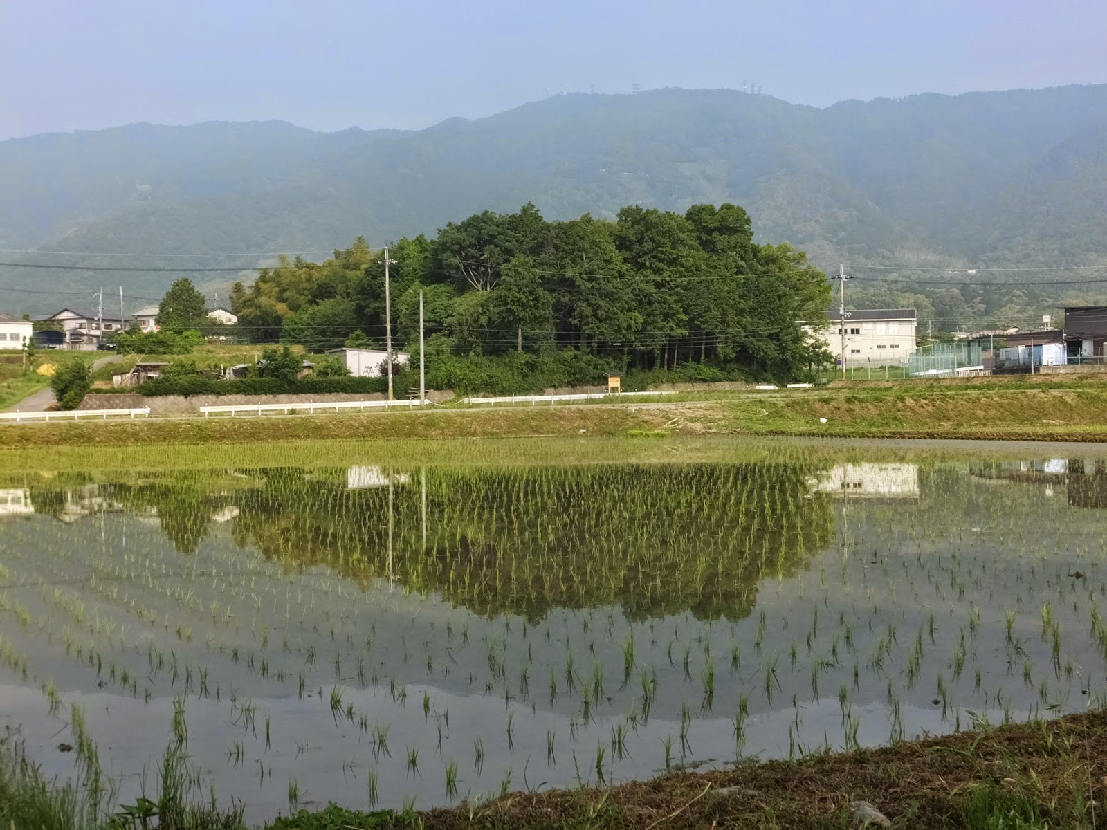 田植えも終り長閑な田園風景。