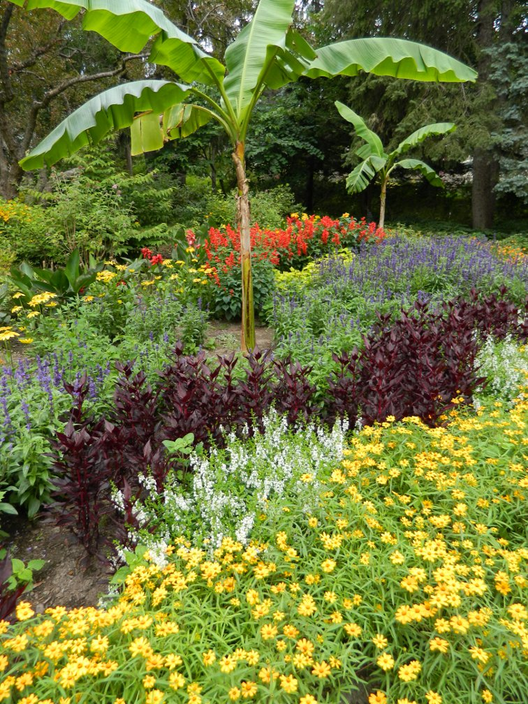 James Gardens annuals layers late summer by garden muses- a Toronto gardening blog