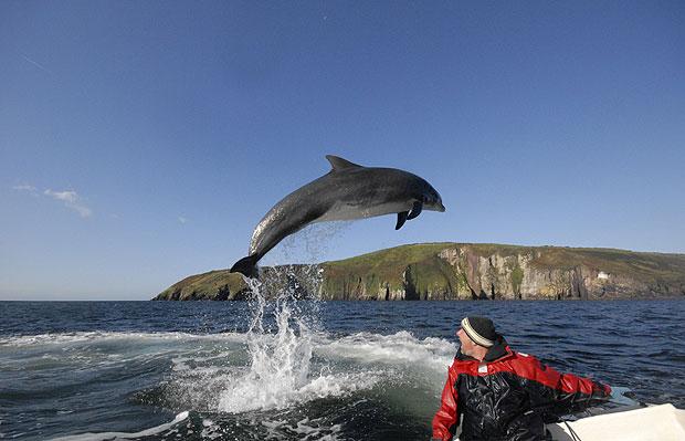 El delfín Fungie de Dingle saltando cerca de un barco
