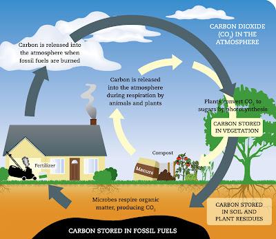 Kitar Karbon dalam Fotosintesis : Faktor-Faktor Yang Diperlukan dan Kepentingannya