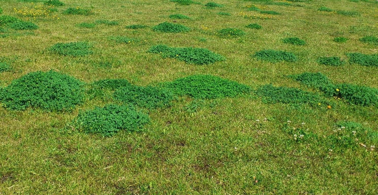 cómo-eliminar-quitar-malas-hierbas-en-césped