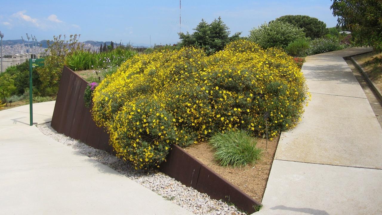 Hablemos de jardines paseo visual por el jard n bot nico for Barcelona jardin
