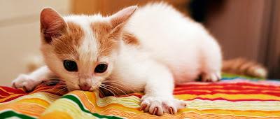 Gato tumbado en cama blanda