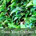 How Does Your Garden Grow - The Pond