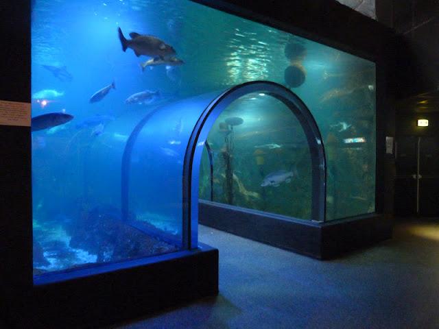 croisic_aquarium