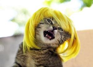 Foto kucing yang ini juga sangat lucu