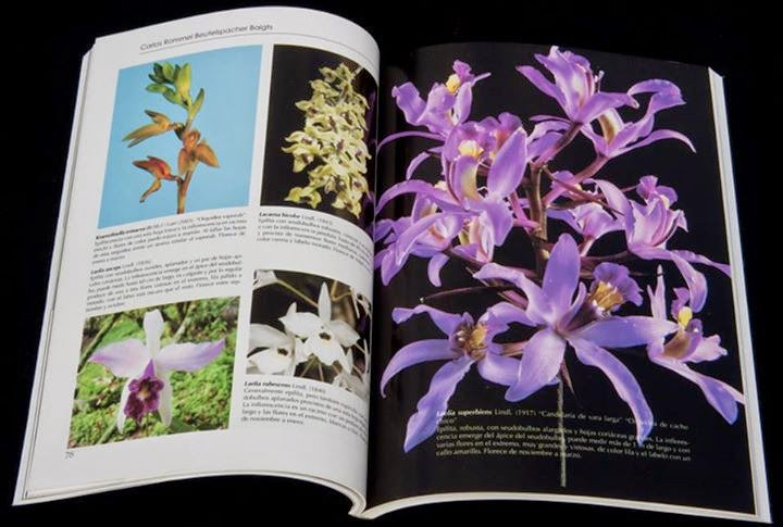 Jehuite libro sobre las orqu deas de chiapas for Botanica general pdf