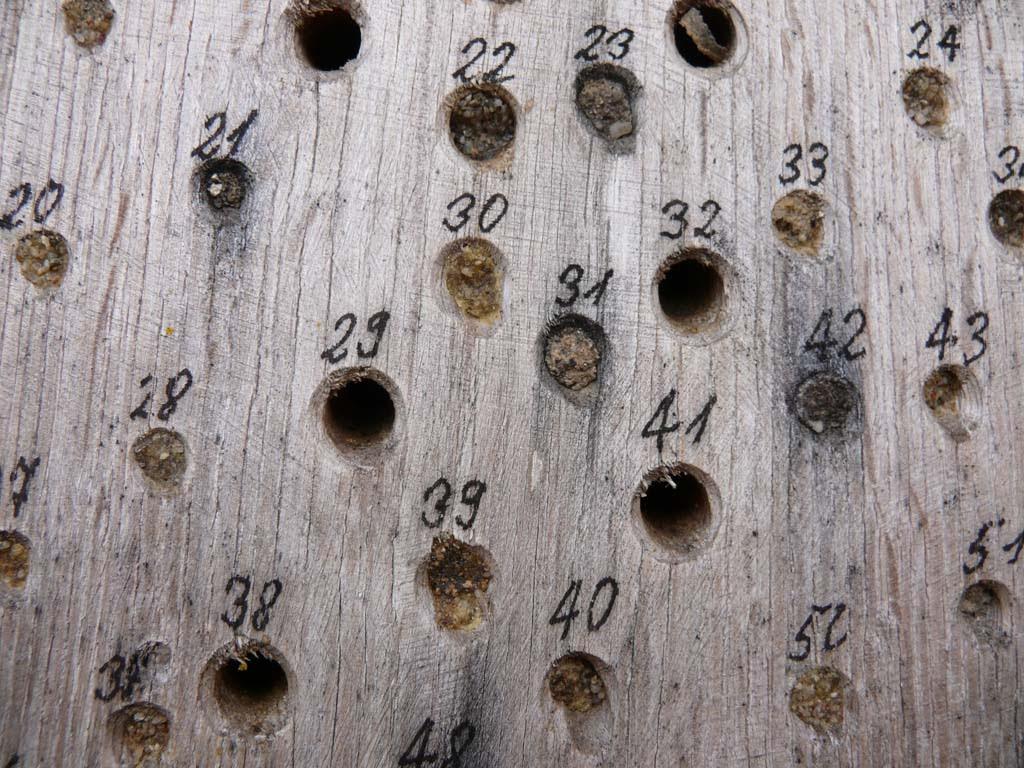 Holz mit Löchern für Insekten