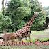 Bahan Belajar SD Kelas 2 Bahasa Indonesia Wisata ke Kebun Binatang