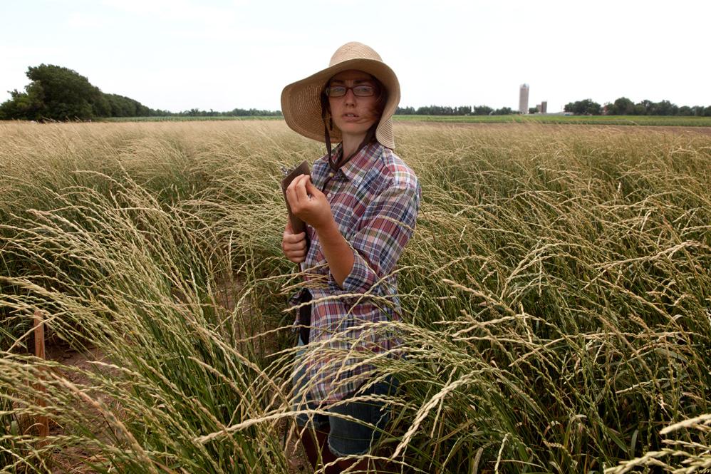 Gathering data on wild wheat samples, Saline County, Kansas