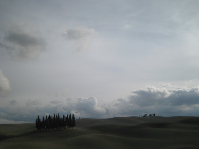 Tuscany's famous group of cypress trees near San Quirico d'Orcia