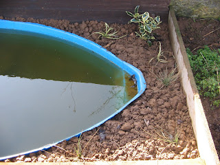 pond grasses planted