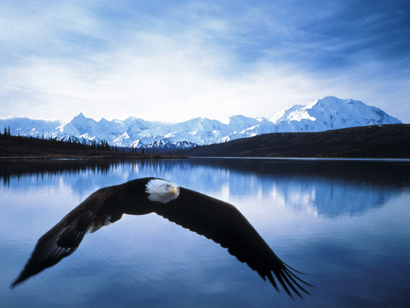 http://3.bp.blogspot.com/-fcpxzbZ7OY0/T_Q2kZ8yqLI/AAAAAAAAD0A/A3kOceSg0Mc/s1600/Bald+eagle+wallpapers+9.jpg