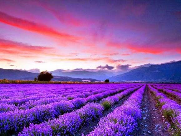 phim viet nam nhung canh hoa truoc gio